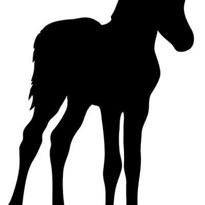 Csikónevelés és idős lovak